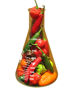 Erlenmeyer peppers